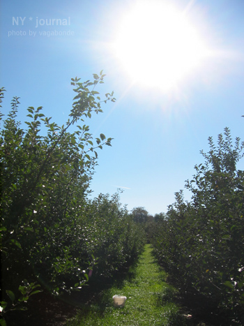 apples_02.jpg