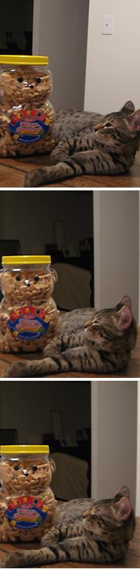 animal cracker02.jpg