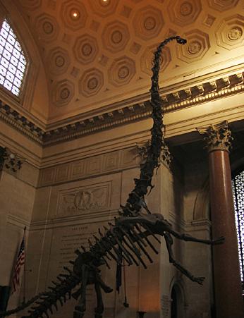 barosaurus.jpg
