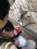 animal03.jpg